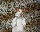 savannah - What's My Puppy?