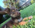 Myka - What's My Puppy?