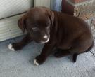 Iggy - What's My Puppy?