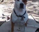 my dog Riley Dean