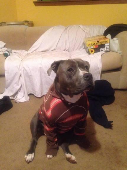 Zeus - What's My Puppy?