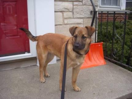 Brinkley - What's My Puppy?