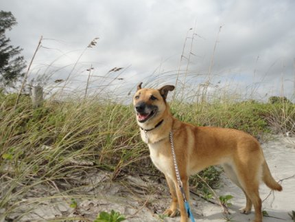 Brandy at the beach looking for a family of her own.