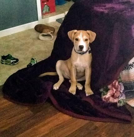 Julius - What's My Puppy?