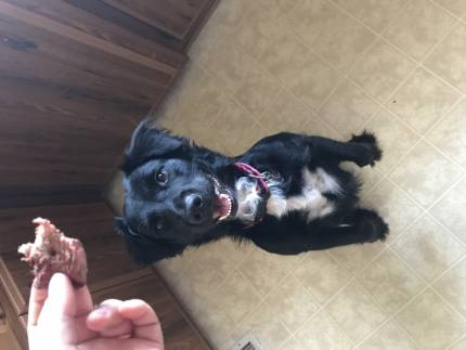 Chloe - What's My Puppy?