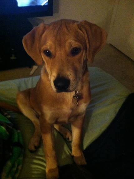 Macintosh - What's My Puppy?
