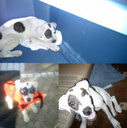 PITA - What's My Puppy?