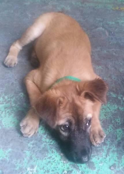 Mucho - What's My Puppy?