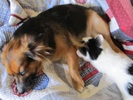 Mena *VALENTINES UPDATE* - What's My Puppy?
