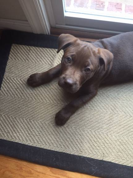 Nikka - What's My Puppy?