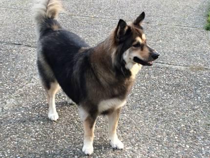 Kilo - What's My Puppy?