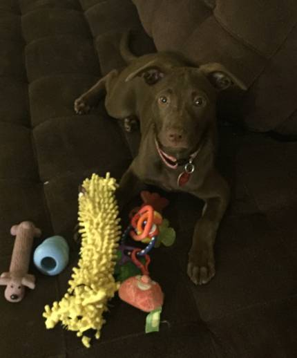 Jessie - What's My Puppy?