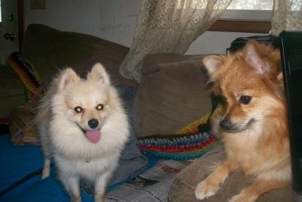 Max & Zoey