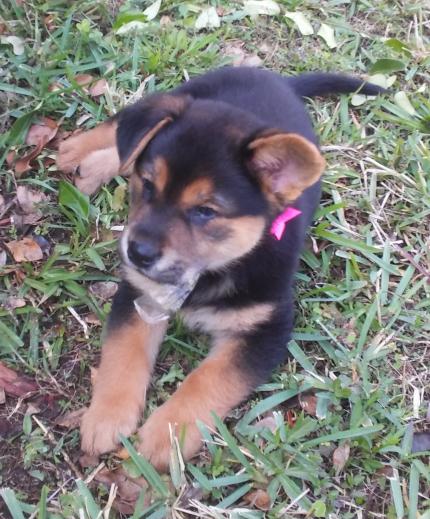 moxie - What's My Puppy?