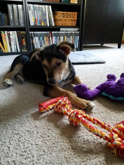 Arthas - What's My Puppy?