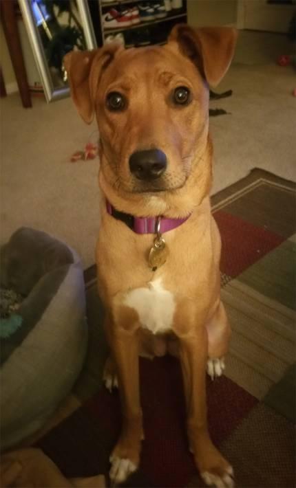 Starkey - What's My Puppy?